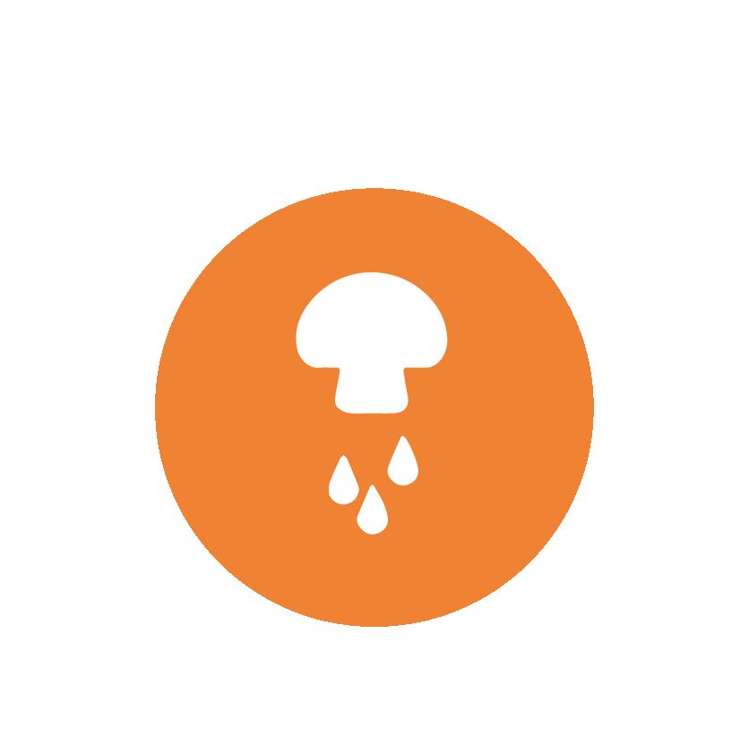 soggy-orange